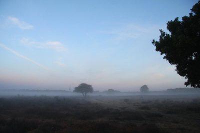 De Westerheide in de mist
